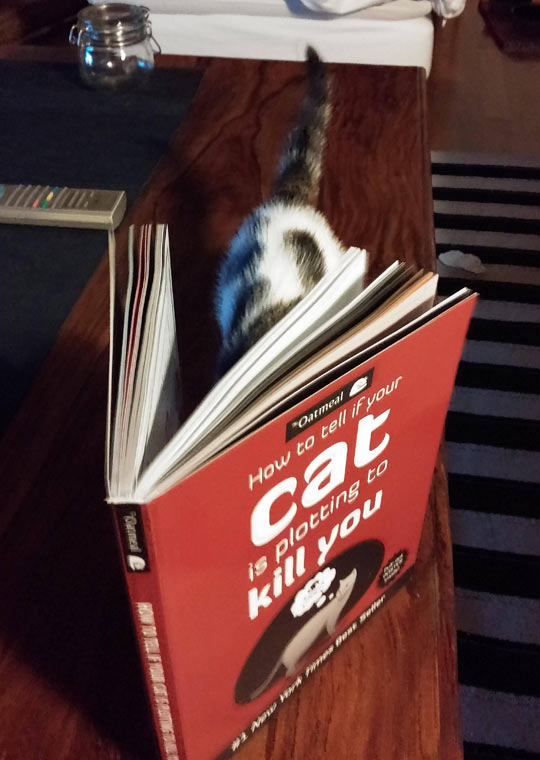funny-cat-reading-book-plotting