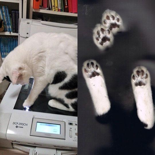 A Cat Scan