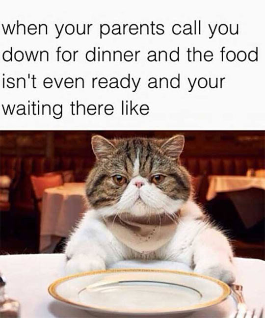 funny-cat-waiting-foot-table-dish