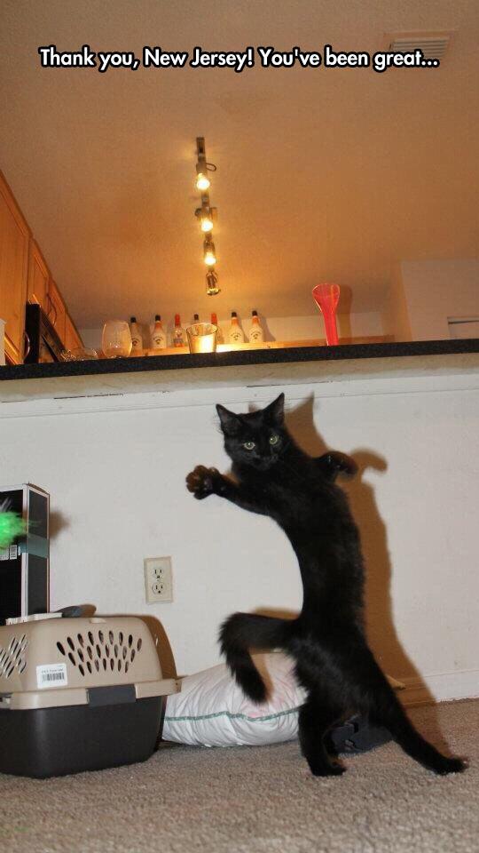 funny-cat-waving-walking-two-legs
