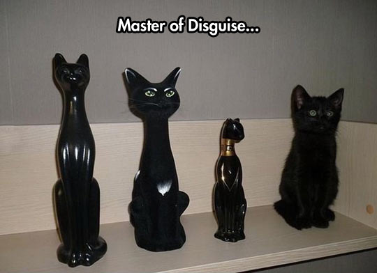 funny-cats-decoration-live-disguised