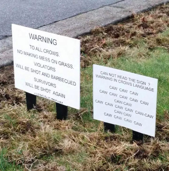 Warning To All Crows