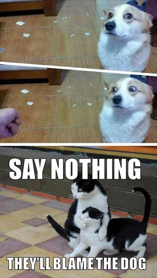 funny-dog-mess-guilty-cats