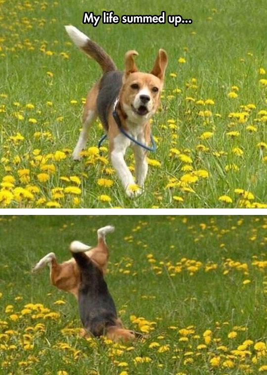 funny-dog-running-falling-green-field