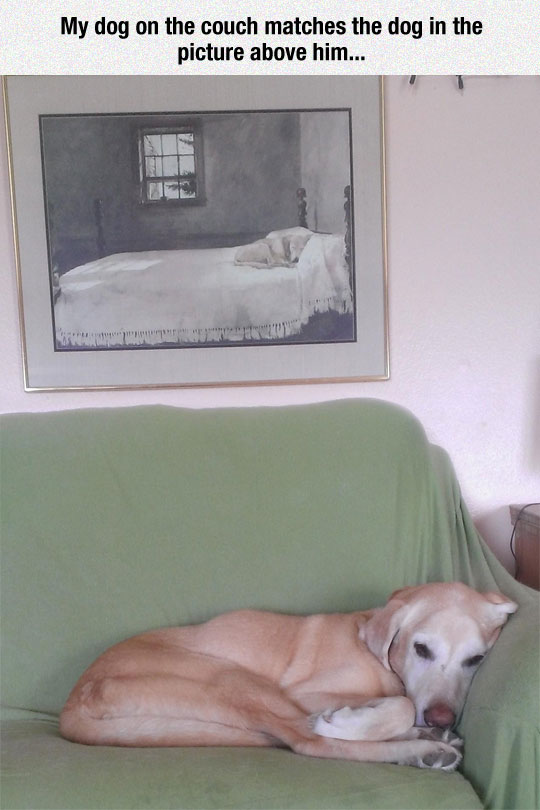 funny-dog-sleeping-couch-painting-similar
