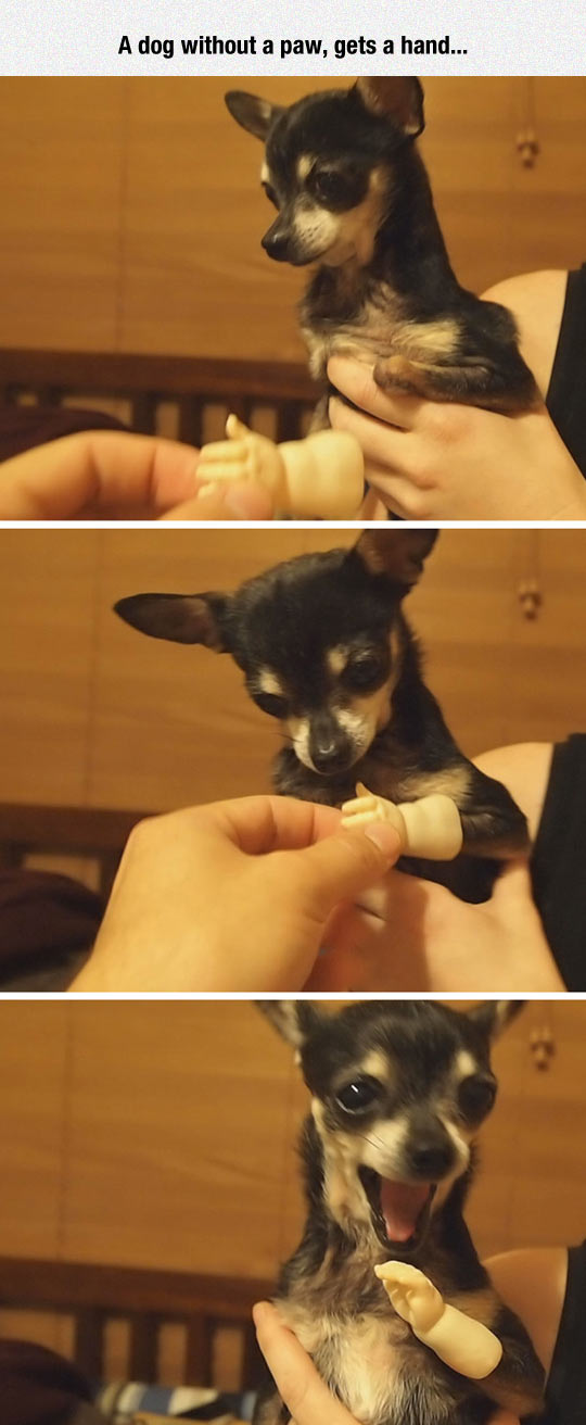 Puppy Gets A Prosthesis Hand