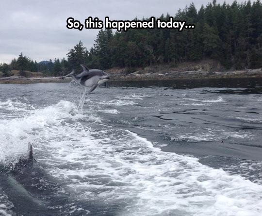 Majestic Dolphin Jump