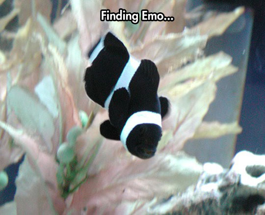 funny-emo-Nemo-fish-color