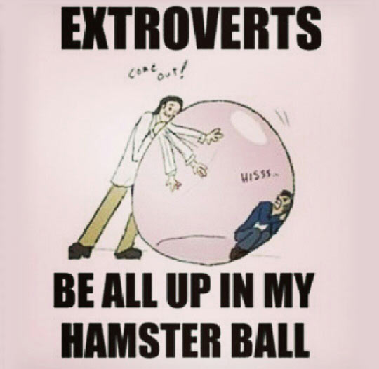 funny-extroverts-bubble-hamster-ball
