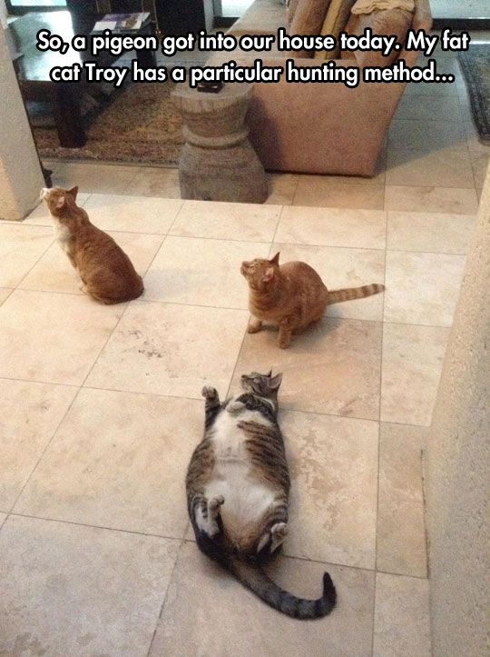 funny-fat-cat-laying-floor