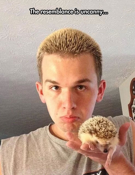 Hedgehog Found A Friend
