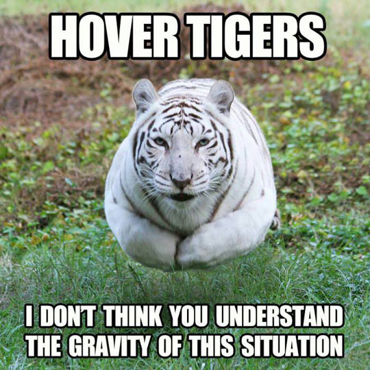 Fear Of The Hover Tiger