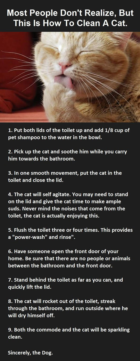 This Is How You Clean Your Cat