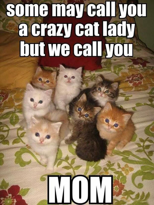funny-kitties-mother-crazy-lady