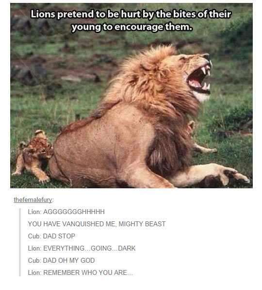 funny-lion-hurt-lie-pretend-baby