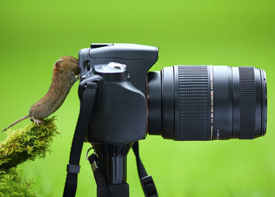 funny-mouse-taking-photograph-camera