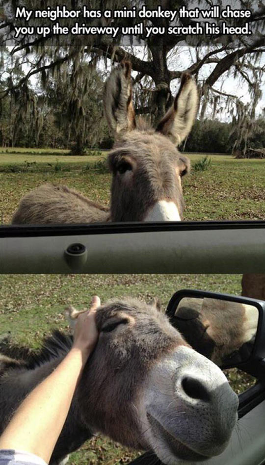 Donkeys Are Sweet Pets