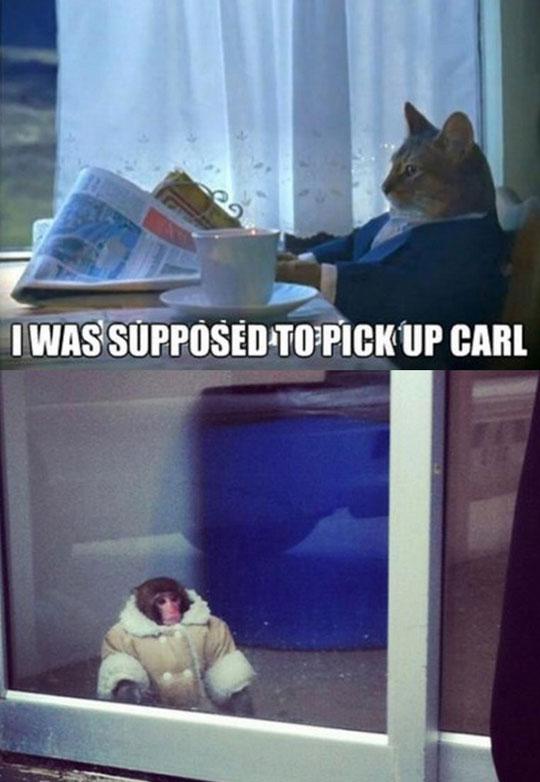 funny-newspaper-cat-monkey-suit