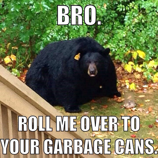 funny-obese-bear-fat-black