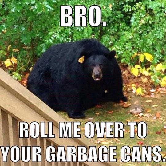 Obese Black Bear