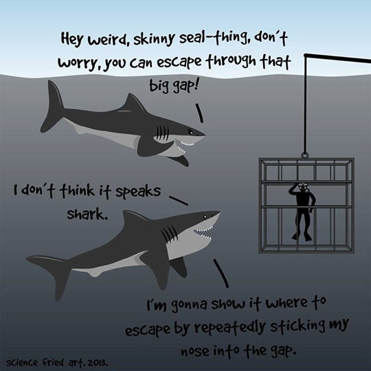 funny-ocean-shark-cage-diver-drawing