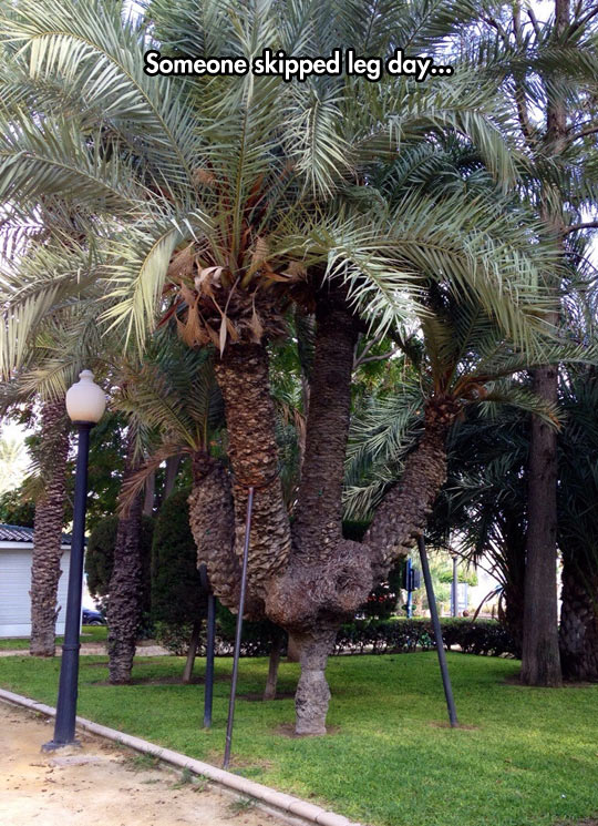 funny-palm-thin-trunk-park