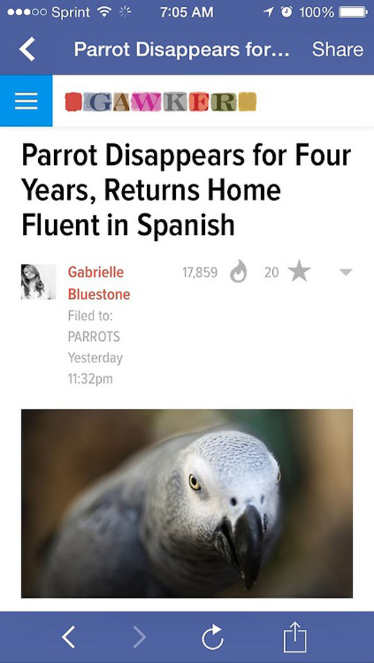 funny-parrots-bird-disappears-Spanish