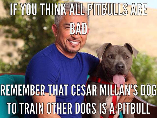 Remember Cesar Millan
