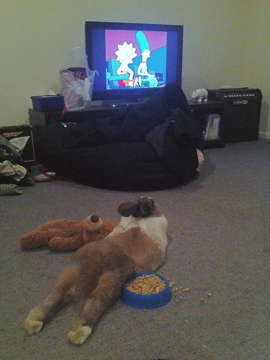 Dog Watching TV Like A Kid