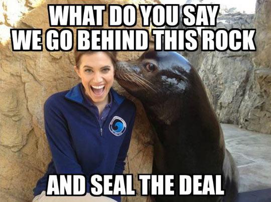 funny-seal-aquatic-park-girl-flirting
