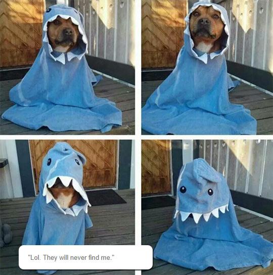 The Rare Dog-Shark