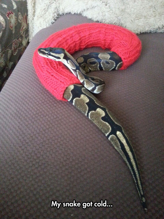 funny-snake-clothes-knitted-cold
