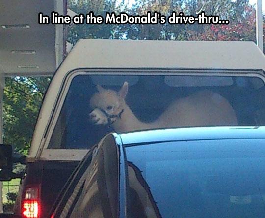funny-truck-cargo-alpaca