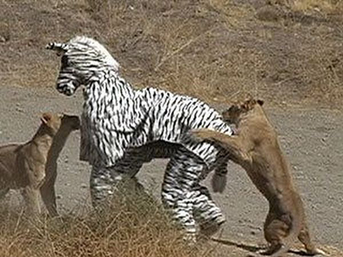 bad-idea-zebra2