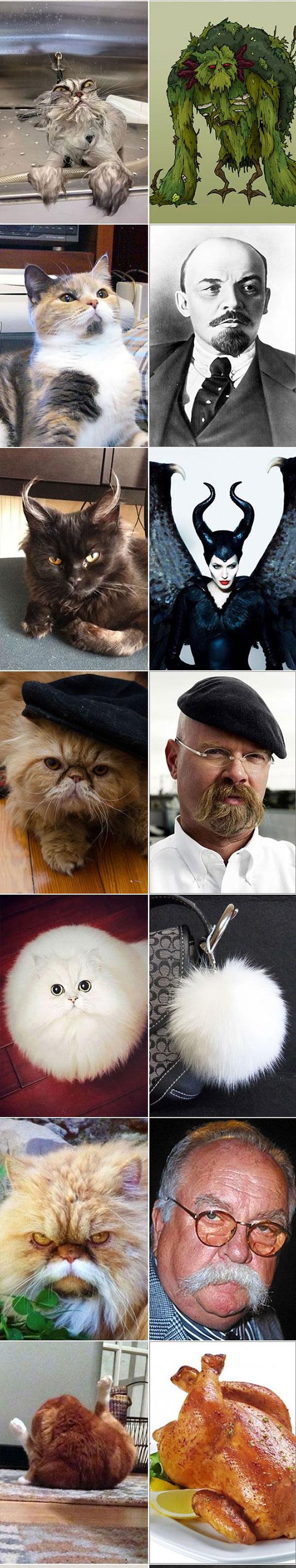 cool-cats-lookalike-Freud-chicken