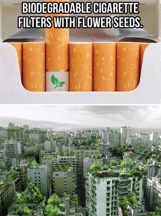 cool-cigarette-seeds-building-trees