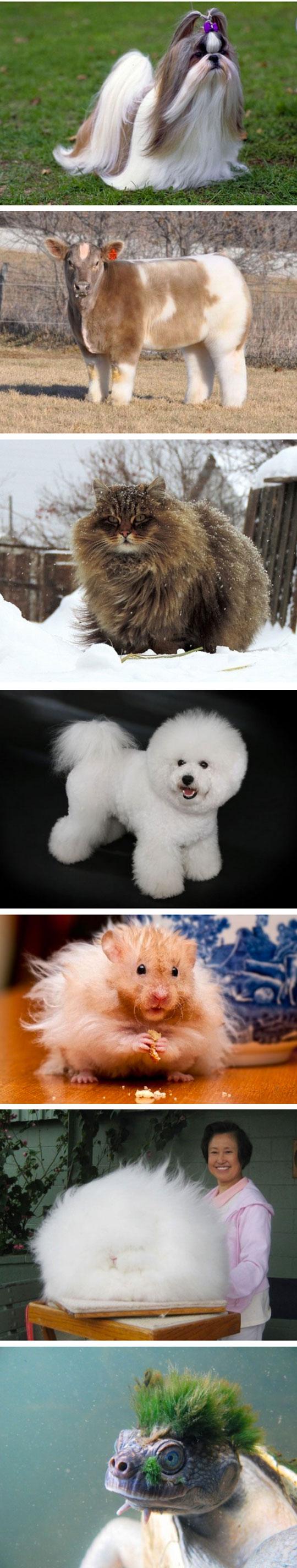 cool-cute-fluffy-dog-bunny