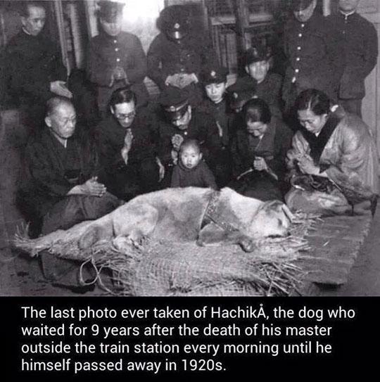 The Last Photo Ever Taken Of Hachiko