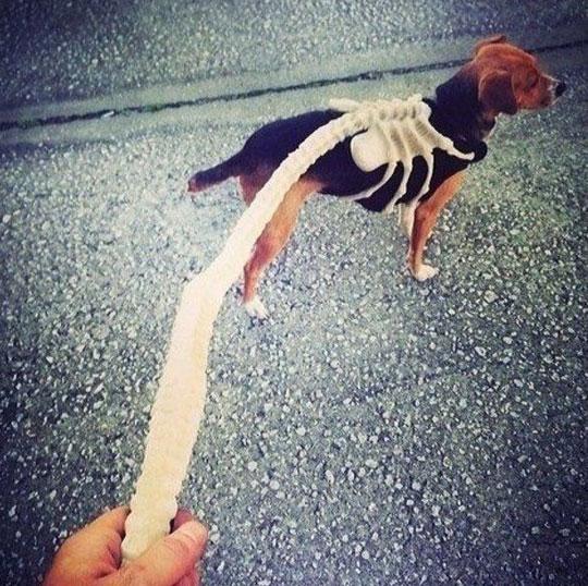 cool-dog-leash-hugger-Alien