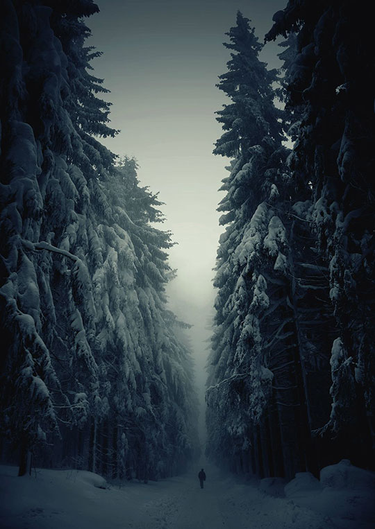 cool-winter-forest-snow-path