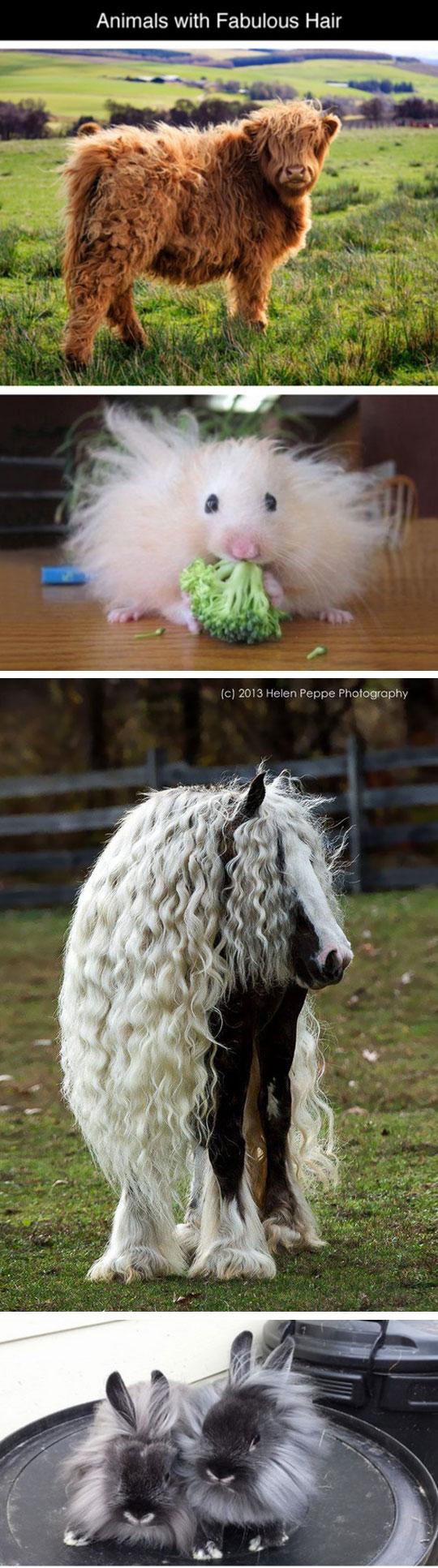 cute-animals-hair-fur-great