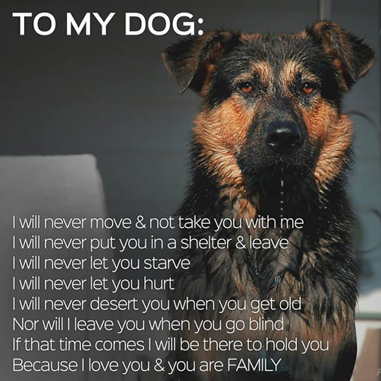 Pledge To My Dog