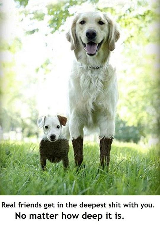 cute-dog-puppy-mud-fur