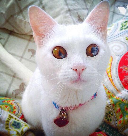 The Best Kitten Eyes I