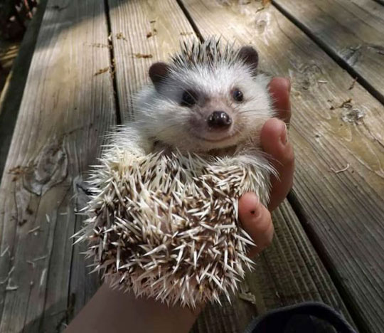 The Happiest Little Hedgehog