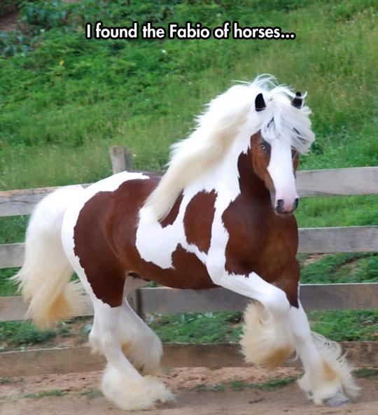 cute-horse-hair-blonde