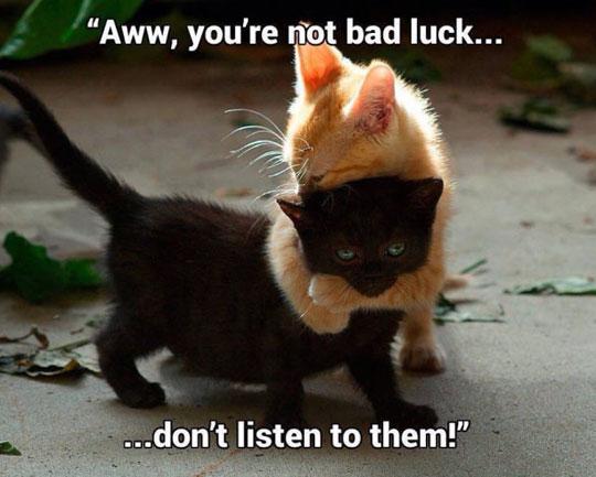 cute-kitty-hugging-black-cat