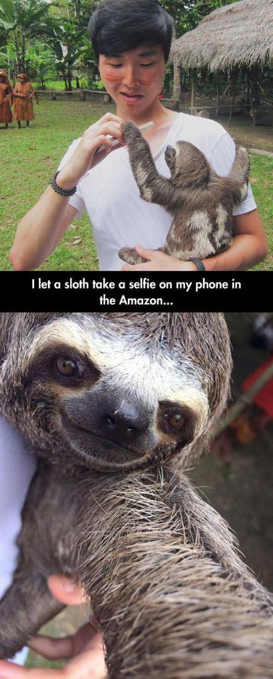 cute-sloth-selfie-Amazon