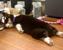 dogs_sleeping_10