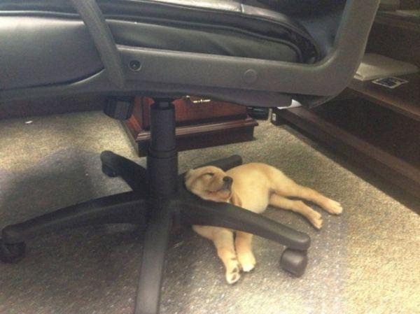 dogs_sleeping_12